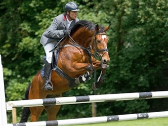 JUMPING HORSES FOR SALE - CLICK ON THE IMAGE